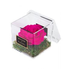 1 Large Long Life Fuschia Rose in a Clear Acrylic Square box 10x10cm