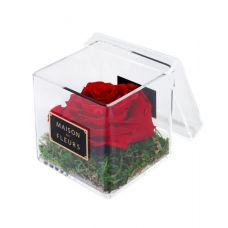 1 Large Long Life Red Rose in a Clear Acrylic Square box 10x10cm