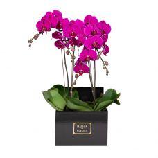 4 Purple Orchids in 30x30cm Black Square Box