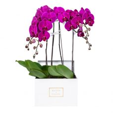 4 Purple Orchids in 30x30cm White Square Box