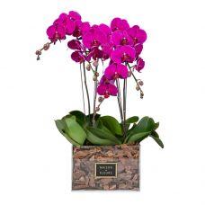 4 Purple Orchids in 30x30cm Clear Acrylic Square Box