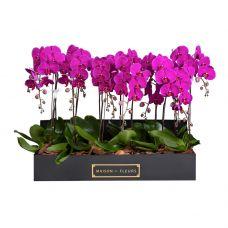 8 Purple Orchids in 90x30cm Black Rectangular Box