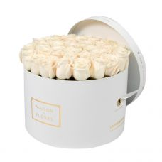 Cream Roses in White Round Box
