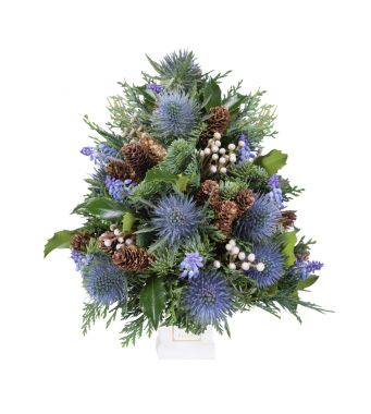 Festive Collection Mini Christmas tree with Blue Eryngium in a 8 cm white square box