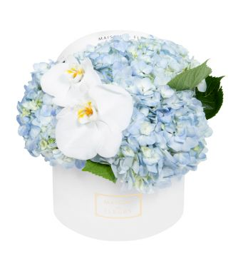 Blue Hydrangea and White Orchid Blooms in 20x15cm White Round MDF Box