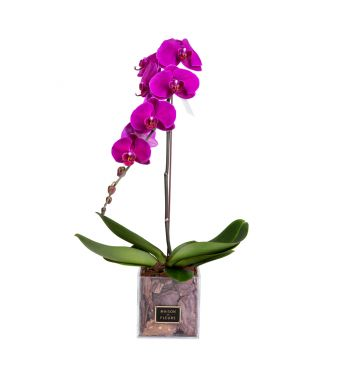 1 Purple Orchid in 15x15cm Clear Square Acrylic Box