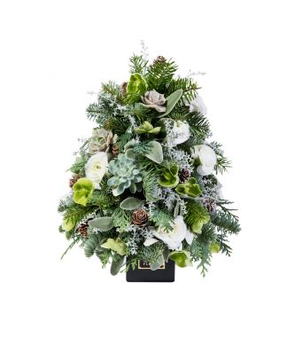 Festive Collection Mini Christmas tree with succulents and Ranunculus in an 8 cm black square box