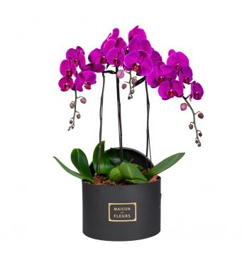 3 Purple Orchids in 30x20cm Black Round Box