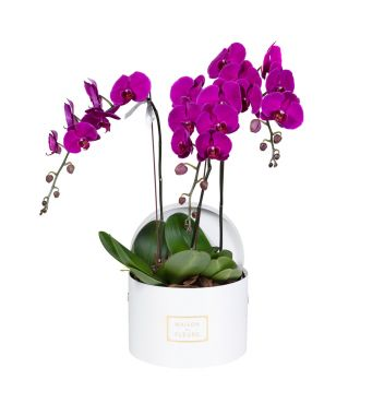 3 Purple Orchids in 30x20cm White Round Box