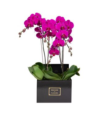 4 Purple Orchids in 30x30cm Black Square Box