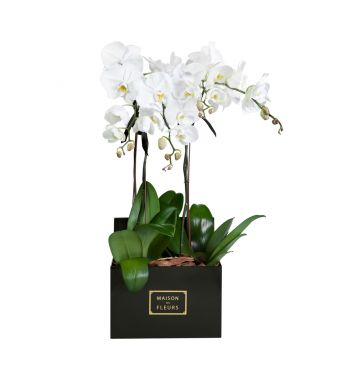 4 White Orchids in 30x30cm Black Square Box