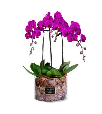 3 Purple Orchids in 30x20cm Clear Round Acrylic Box