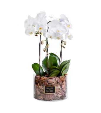 3 White Orchids in 30x20cm Clear Round Acrylic Box