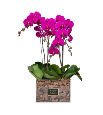 4 Purple Orchids in 30x30cm Clear Acrylic Square Box
