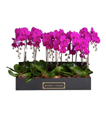 8 Purple Orchids in 90x30cm Black Rectangular Box