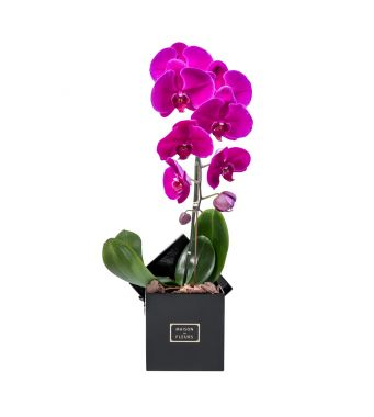 1 Purple Orchid in 15x15cm Black Square Box