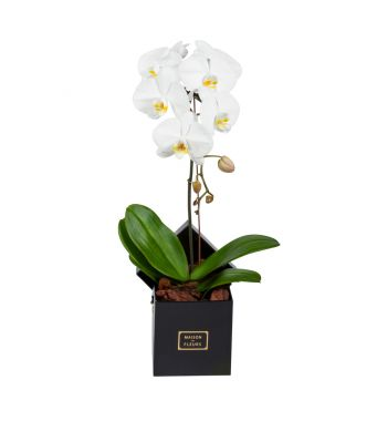 1 White Orchid in 15x15cm Black Square Box