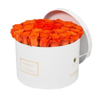 Orange Roses in White Round Box