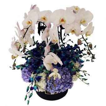 3 White Orchid Plants and Mixed Flowers in Black Round Box