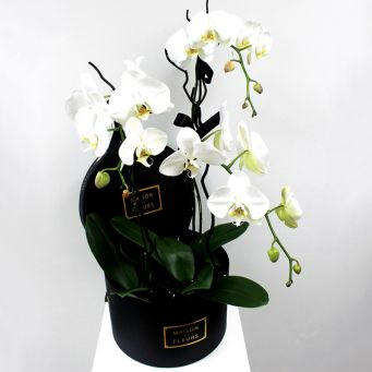 3 Orchids in Round Black Box